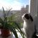 Как отучить кота Барсика есть комнатные цветы