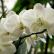Почему орхидеи сажают в прозрачные горшки
