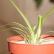 10 комнатных растений, очищающих воздух