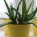 Растения полезные для здоровья