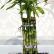 Как закрутить стебель комнатного бамбука
