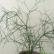 Растение с зеленым стеблем