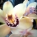 Приметы и суеверия: о растениях и вампирах