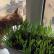 Кот-цветовод: о зеленых витаминах для котов и кошек