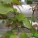 Как вырастить киви из семян