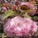 История растений: культ цветов в Японии