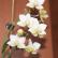 Тайна несравненной орхидеи