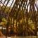 Растение № 1: пальма прекрасная